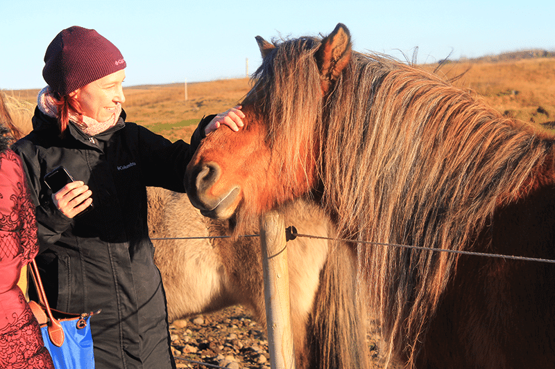 Icelandic horses, Golden Circle, ThuleTravel